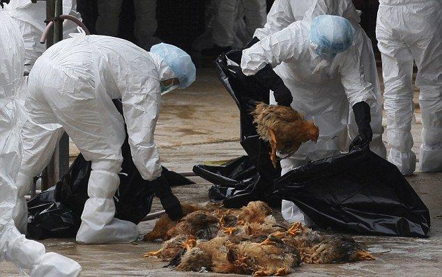 شیوع آنفلوآنزای پرندگان در بحبوحه همه گیری کروناویروس در چین