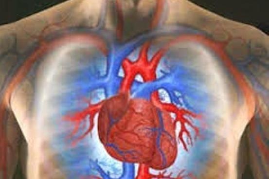 همکاری محققان دانشگاه آزاد و هاروارد در ساخت داربست دریچه قلب