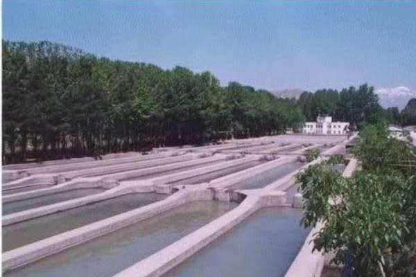 فراوری غذای حاوی آرتمیا برای آبزیان از واردات جلوگیری کرد