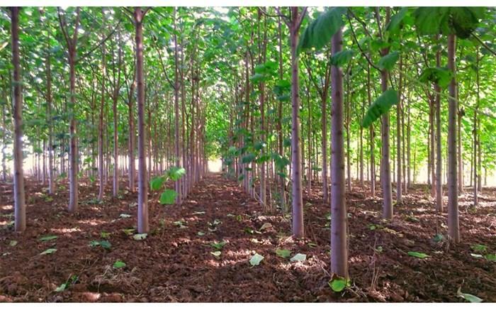 فراوری یک میلیون متر مکعب چوب از باغ ها و اراضی ملی
