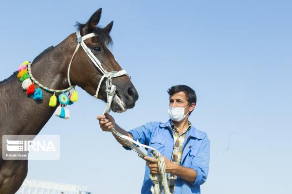 آبادان میزبان جشنواره اسب اصیل عرب