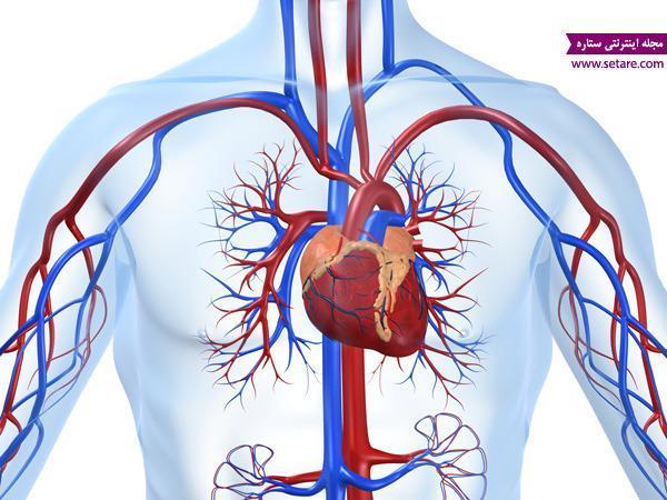 آشنایی با بیماری های قلبی و عروقی؛ علت، علائم و راه های درمان