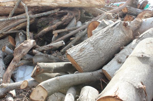 خبرنگاران کشف چوب آلات جنگلی قاچاق در خلخال افزایش یافت